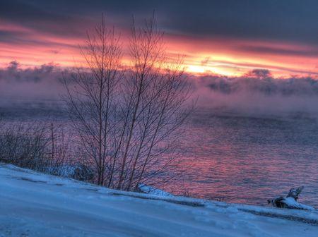Lake-Superior-Tree