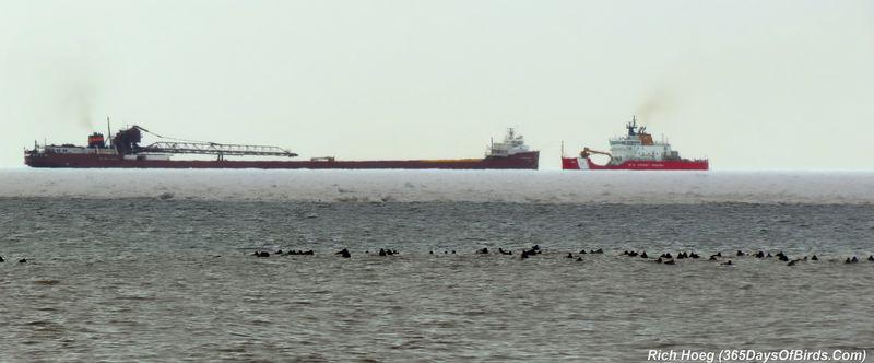 098-Birds-365-Ducks-Coast-Guard-2